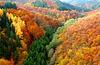 DE - Mörsdorf - Autumn colours, seen from Geierlay bridge