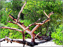 Seychelles : Anse Lazio- Praslin
