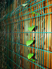 Fenced fence