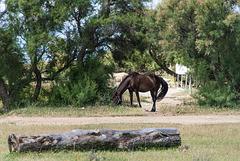 Centre équestre L'Equus Caballus Fr 11 Leucate  ( + 7 notes )