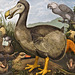 Dodo and Friends – Natural History Museum, South Kensington, London, England