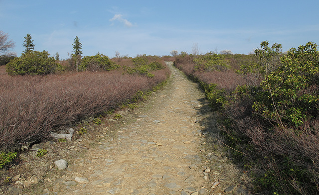 Hiking trail through this heathland/these heathlands of the Dolly Sods Wilderness.