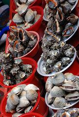 Muscheln - Mussels