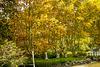 Autumn Foliage, el Tigre, Buenos Aires, HFF