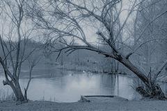 Winter Scene   /   Jan 2021