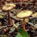 20170923 2988CPw [D~MI] Pilz, Großes Torfmoor, Hille