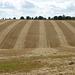 Salisbury Plain, Wiltshire