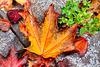 1 (23) leaf on street ...herbst autumn