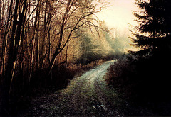 Road to the morning sun