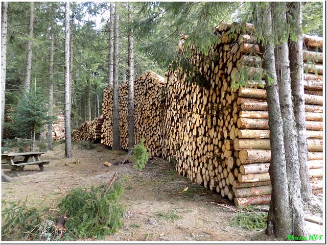 Huge work from the lumberjacks!