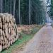 Taunusstein Bleidenstadt im Wald
