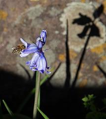 Bee-shadow