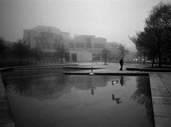Man, birds, fog, litter