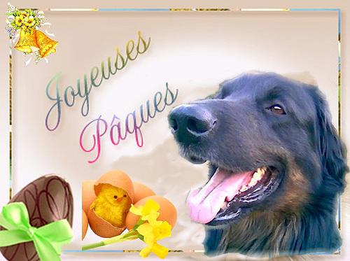 Sirius vous souhaite de Joyeuses Pâques.