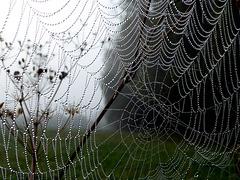 Spinnennetz oder Perlenkette?