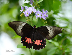 I could not resist another butterfly.