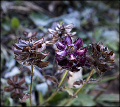 Flors de tardor a la serra de Conivella