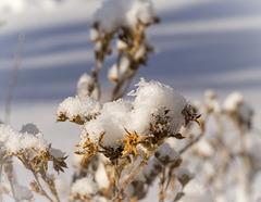 Fresh Snow on a Sunny Day