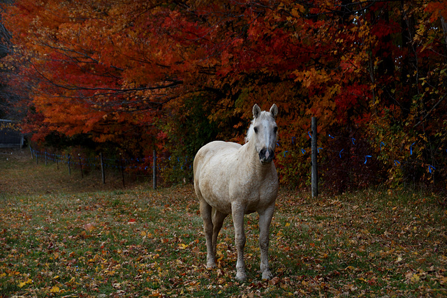 Autumn color and a posing horse