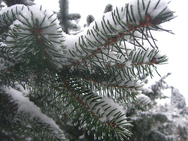 003  Winterimpressionen