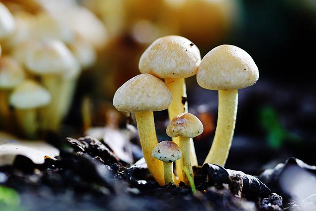 Winziger Schönling, aber ungenießbar - Tiny beauty, but inedible