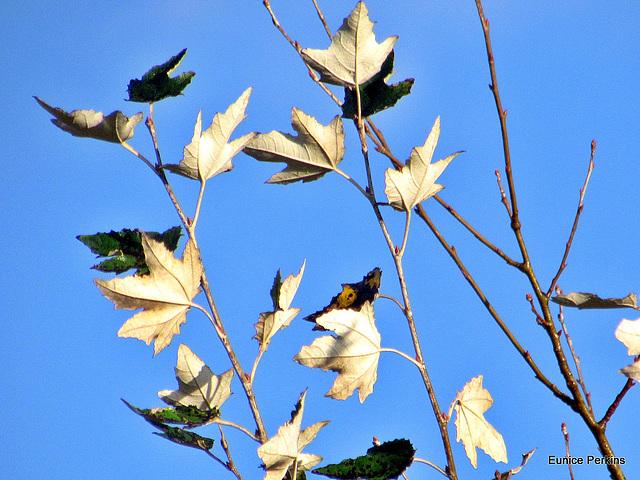 Just Leaves.