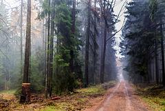 Taunussteiner Wald