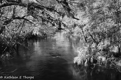 Hillsborough River State Park 007
