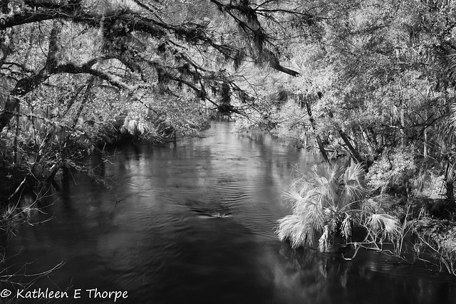 Hillsborough River State Park 007