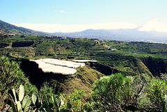 Blick über den Barranco de las Angustias in Richtung Los Llanos.  ©UdoSm
