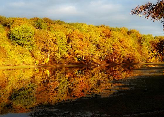 Un matin en or / A golden morning [ON EXPLORE]