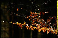es wird Herbst........