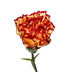 Flower 001 081017
