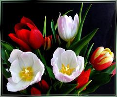 Spring blossoms... ©UdoSm