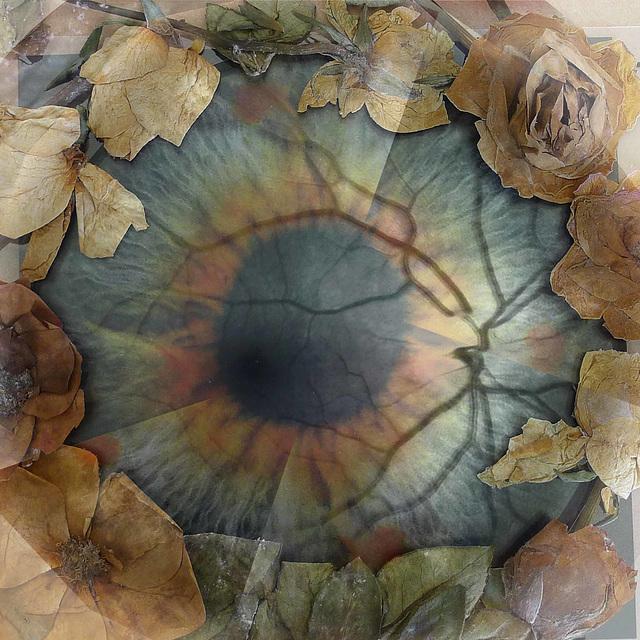 composite eye 1