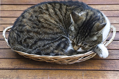 Panier de chat