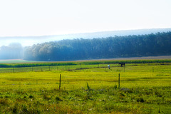 Die ersten Herbstnebel - The first autumn mists