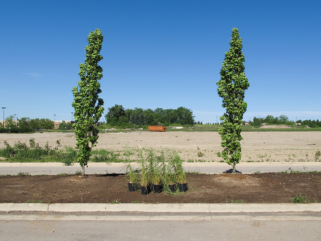 2 ornamental trees and 5 flowerpots of median strip.