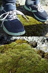 Feet on moss