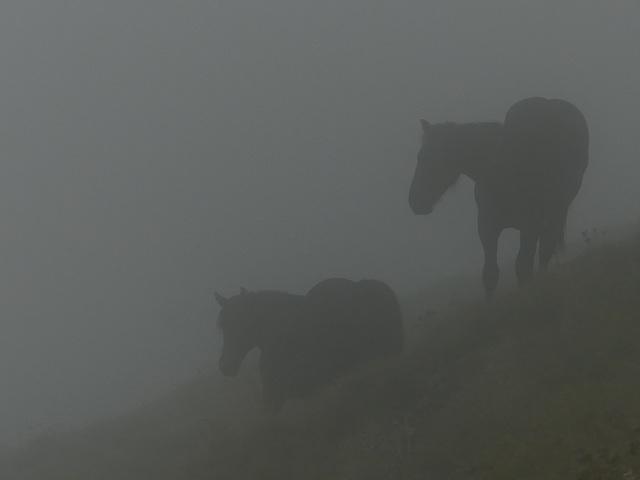 20210822 -0906 Ariège (213)