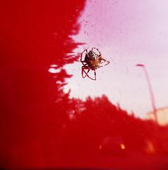 il ragno che mi ha accompagnato