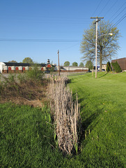 Ditch of cattails.