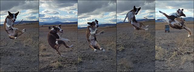 The stick acrobat