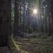 Bleidenstadter Wald
