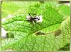Vegetarian ant... ©UdoSm