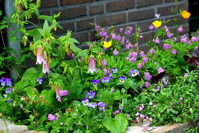 A litle corner in the garden...