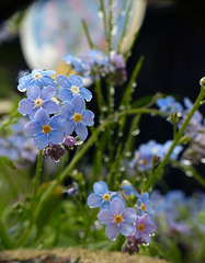 Beaded Forgetmenots