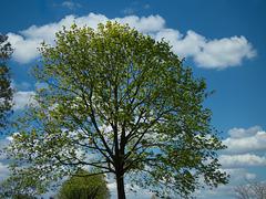 1 (52)...tree ...baum