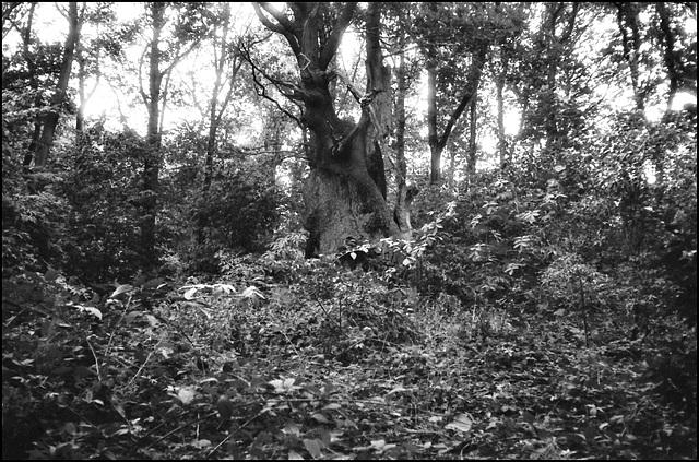 Woods near Shoreham, Kent.