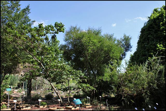Jardin botanique de La Charme -63 (1)